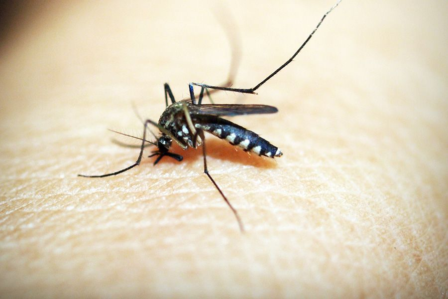 King of Diseases Malaria is Now Easily Preventable